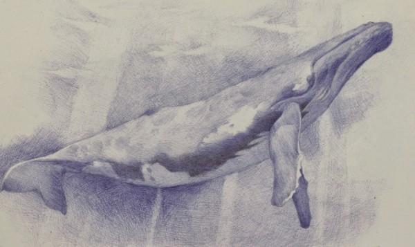 Ballena Yubarta (32,5 x 45 a boli Bic azul).