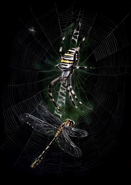 Araña tigre y libélula